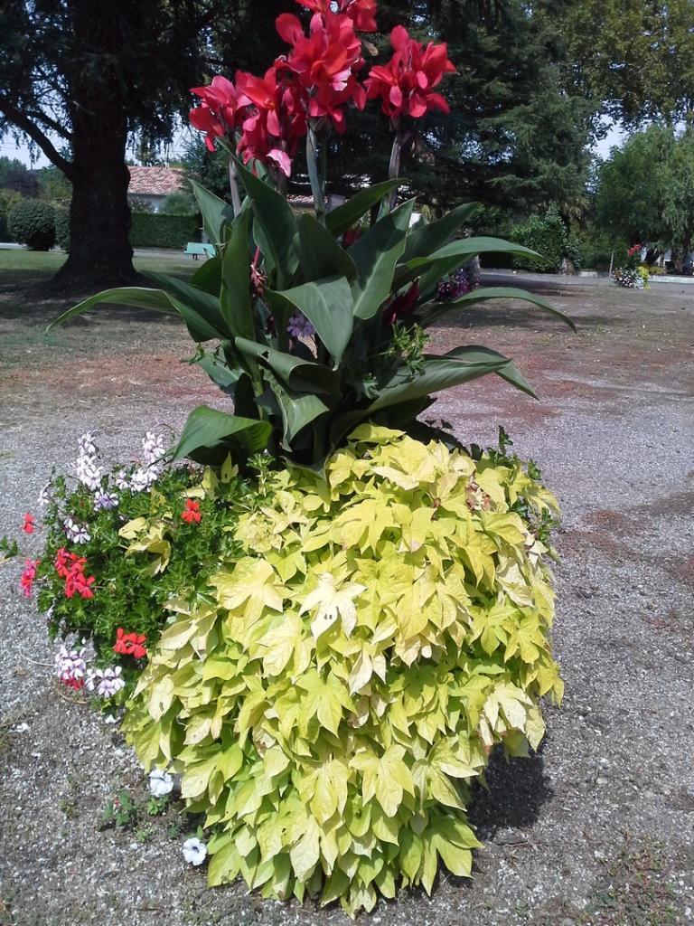Les fleurs (10)