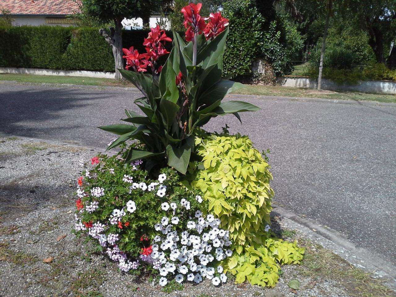 Les fleurs (5)
