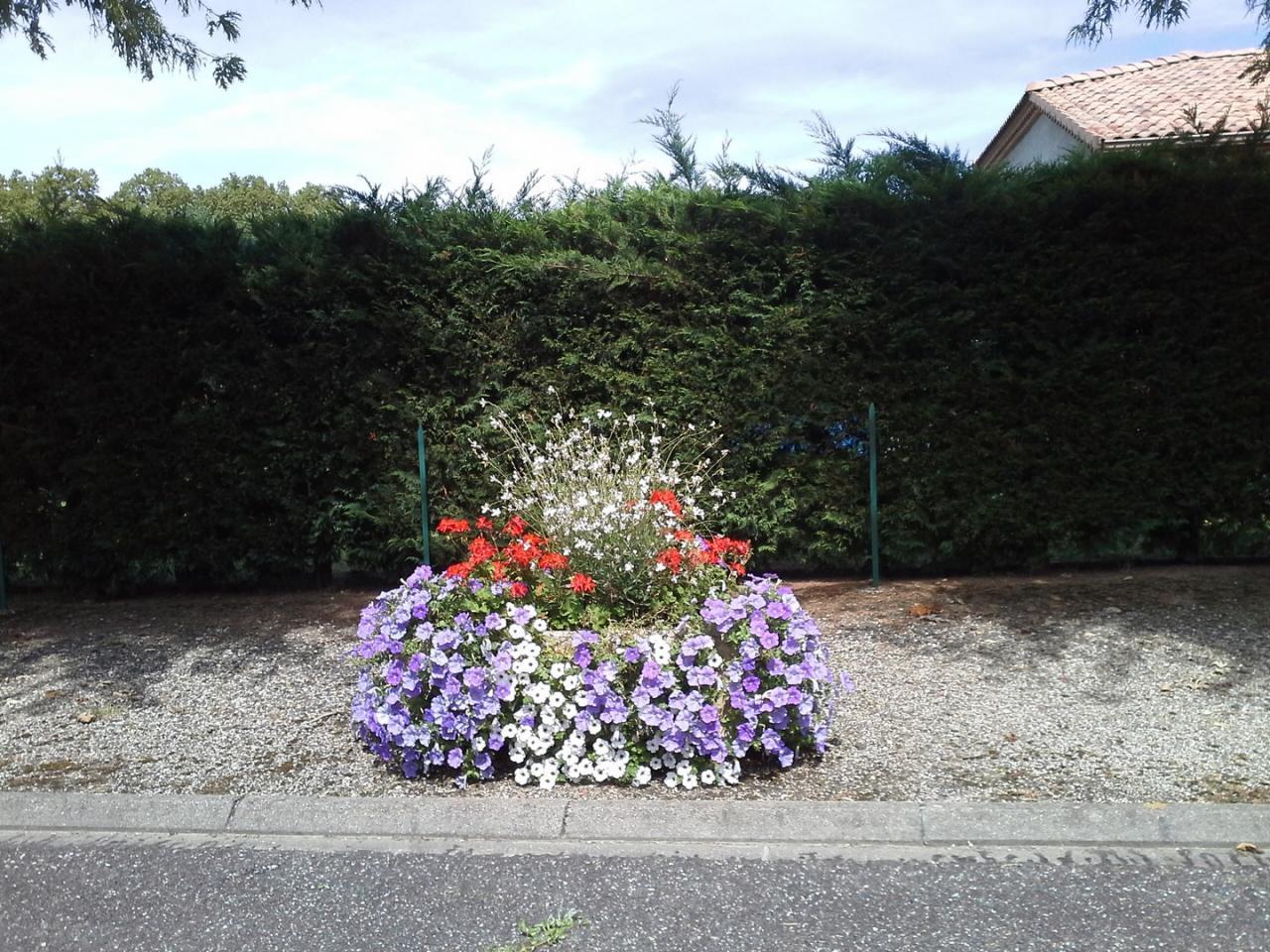 Les fleurs (6)